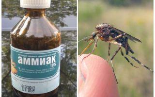 אמוניה נוזלית מפני יתושים