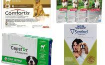 איך להיפטר פרעושים בכלבים, האמצעי היעיל ביותר של פרעושים