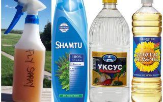 שמפו זה דוחה יתושים + חומץ