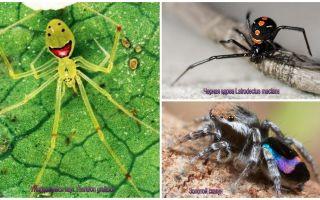העכבישים היפים ביותר בעולם