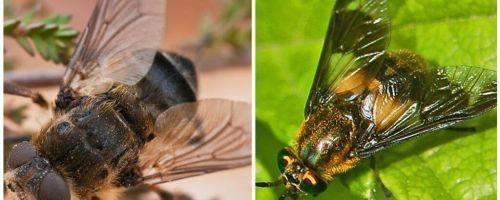 ההבדל בין gadfly ו עיוור
