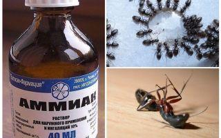 אמוניה מנמלים ותנומות
