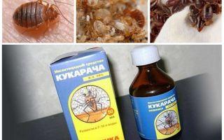 תרופה Cucaracha עבור פשפשים