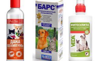 שמפו הפשפשים הפופולרי והיעיל ביותר לכלבים