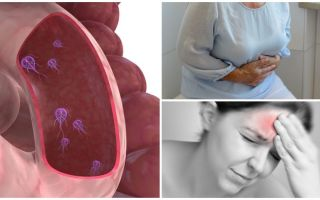 כיצד לקבוע את נוכחותו של Giardia בגוף האדם