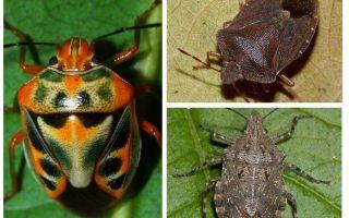 איך נראים החרקים בתמונה