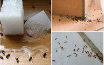 כיצד להיפטר נמלים בבית פרטי תרופות עממיות