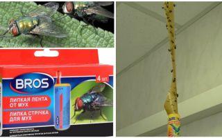 חנות תרופות עממיות עבור זבובים