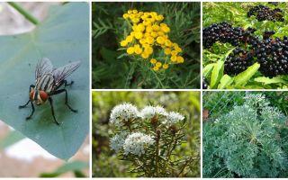 איזה ריח מפחדים זבובים ויתושים