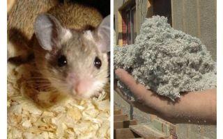 איזה סוג של בידוד לא אוכלים עכברים