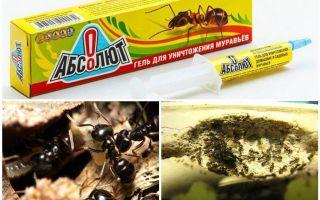 אבסולוט מנמלים