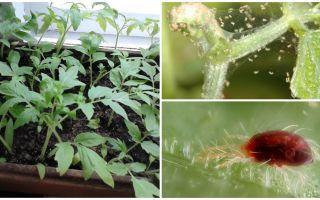 שיטות להתמודדות עם קרדית העכביש על שתילים