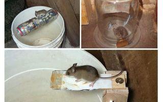 איך לעשות מלכודת עכברים במו ידיך