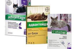 יתרון טיפות פרעושים לחתולים