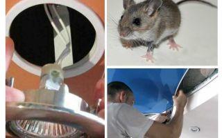 איך להיפטר עכברים בתקרה למתוח