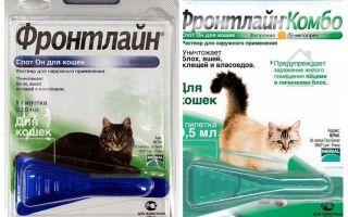 טיפות פרעושים בחזית לחתולים