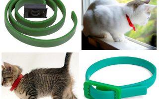 הטוב ביותר של פרעושים ו collars צווארונים עבור חתולים