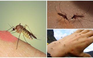 למה יתושים בטבע