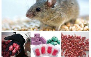 רעל לחולדות ולעכברים