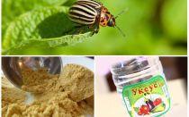 חרדל וחומץ נגד חיפושית תפוחי אדמה קולורדו: פרופורציות וסקירות