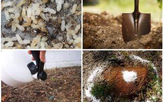 איך להגיע נמלים מתוך הסעד העממי גן
