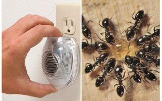 אפקטיבי ultrasound הנמלה