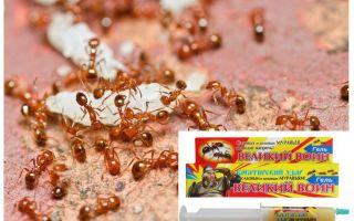 תיקון הלוחם הגדול הנמלה