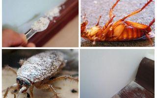סקירה כללית של אבק מקקים