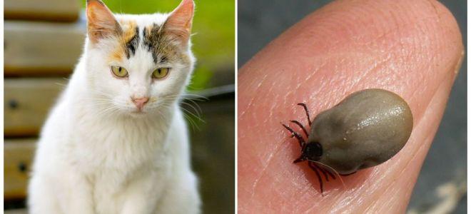 מה לעשות אם החתול היה ננשך על ידי סימן