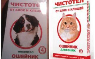 צואת קולרן של חתולים לכלבים וחתולים