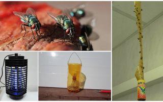 איך להתמודד עם זבובים בארץ