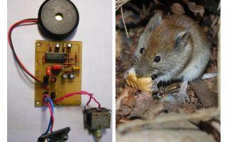 עכברים repellasonic עכברים ועכברים במו ידיהם