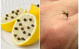 לימון עם שיני יתושים לילדים ולמבוגרים