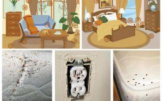 מאבק יעיל עם פשפשים בדירה