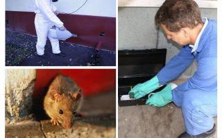 השמדה של עכברים ועכברים על ידי שירותים מיוחדים