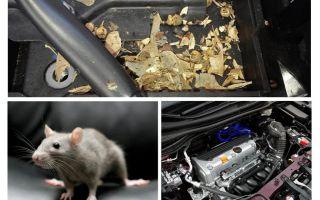 איך להוציא עכברים מהמכונית