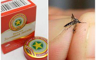 בלסאם כוכב יתוש