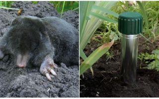 כיצד להיפטר שומות בקוטג 'בקיץ הגן