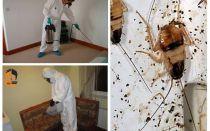 השמדת ג'וקים בדירה