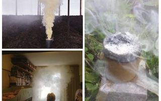 פצצות עשן מקקים