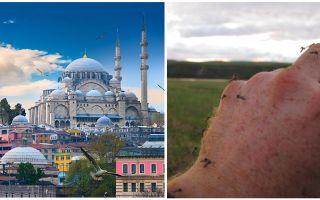 האם יש יתושים בטורקיה