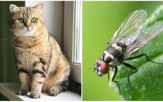 מה לעשות אם חתול או חתול אכלו זבוב
