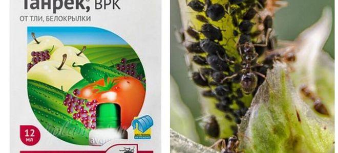 תרופה טנרק עבור כנימות ו whitefly