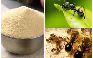 מנקה מן הנמלים בגינה