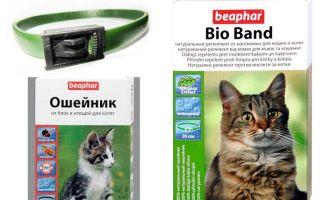 צווארון Beafar מ פרעושים עבור חתולים וכלבים
